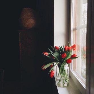 Фото Красные тюльпаны в банке с водой на окне