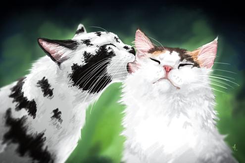 Фото Кот лижет белую кошку, by Aussienka