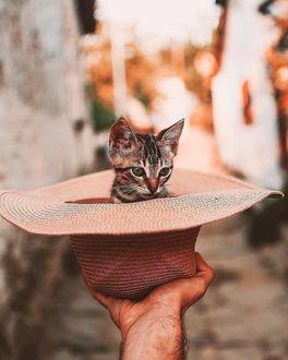 Фото В мужской руке шляпа с котенком
