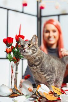Фото Серая кошка на фоне вазы с красными розами и своей хозяйки