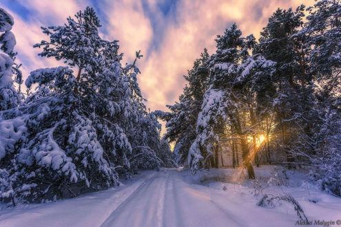 Фото Дорога в зимнем лесу, by Aleksei Malygin