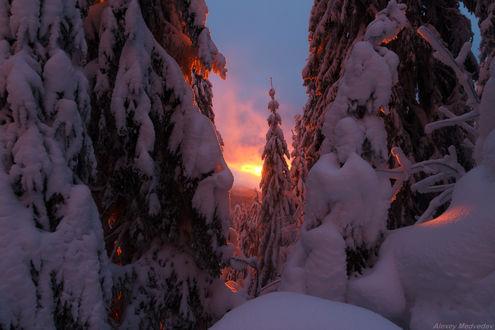 Фото Работа - Сказки зимние. Зима на Свидовецком хребте, Карпаты. Фотограф Алексей Медведев (© zmeiy), добавлено: 10.02.2019 01:15