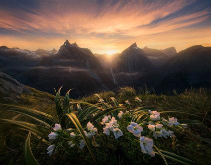 Фото Рассвет в горах Новой Зеландии, на переднем плане белые крокусы, by Marc Adamus (© zmeiy), добавлено: 12.02.2019 08:59