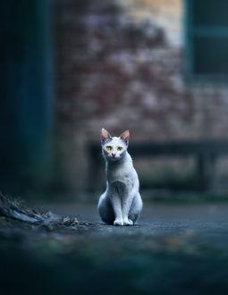 Фото Кот сидит на асфальте, by Ashraful Arefin (© zmeiy), добавлено: 12.02.2019 09:26