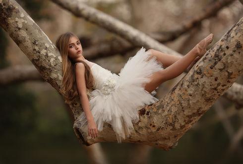 Фото Юная модель Jade Weber / Джейд Вебер в белом платье лежит на дереве, by Katie Andelman