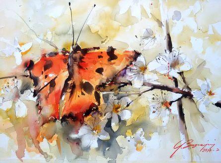 Фото Бабочка на весенних цветах, художник Giuliano Boscaini