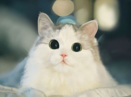 Кошечка с зелеными глазками, by Lee Yong Hyun