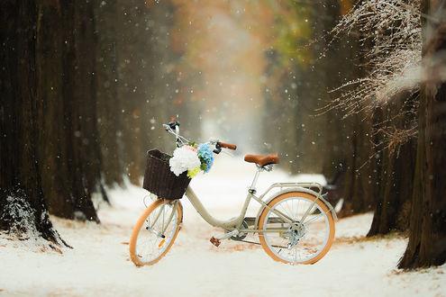 Фото Велосипед с корзиной гортензий стоит на снегу, by Smoothy