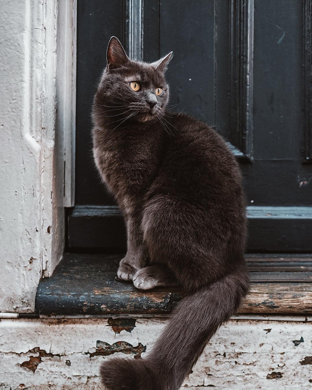 Фото Кошечка сидит возле двери, by eirikbjo