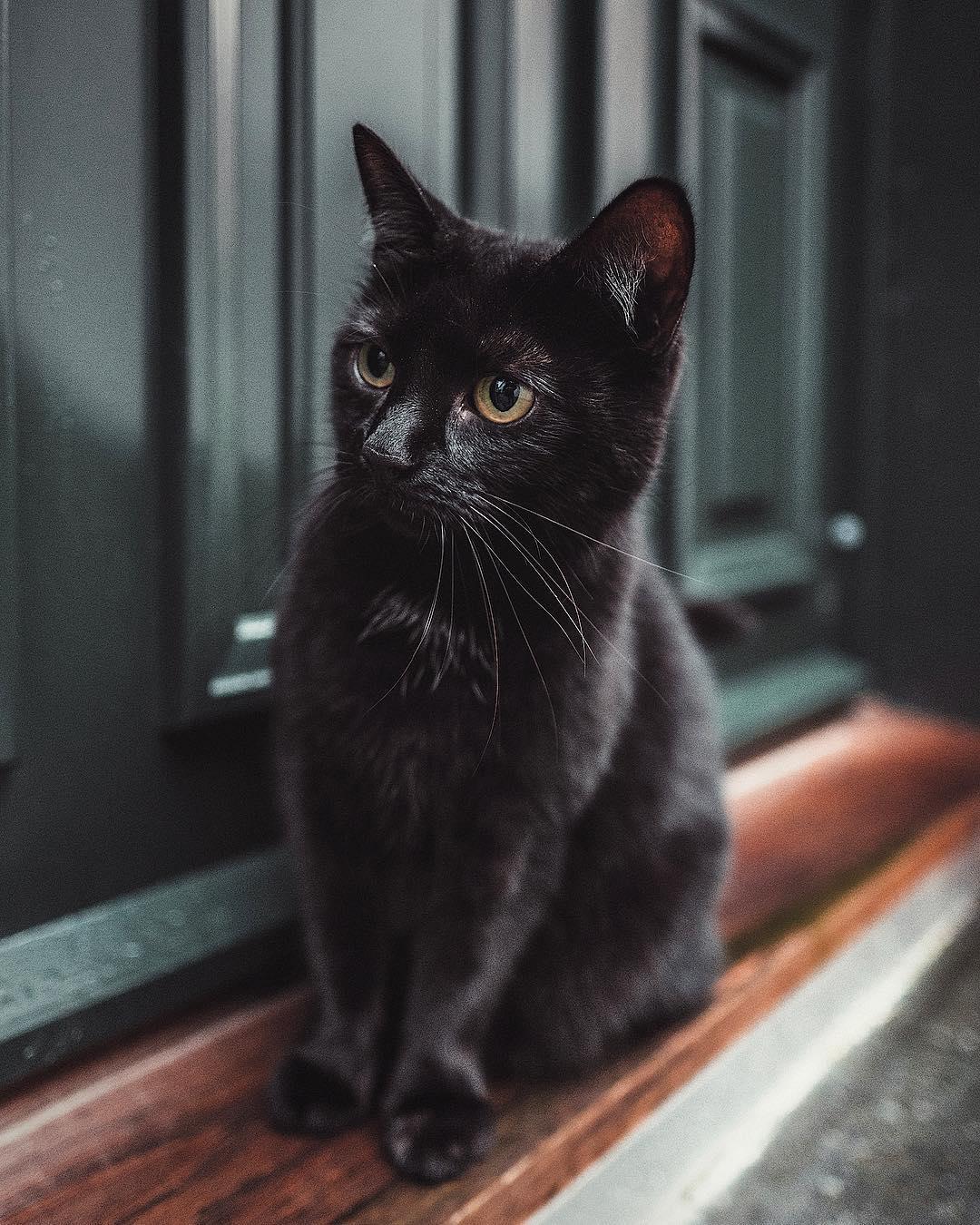 Фото Черная кошечка сидит на пороге дома, by eirikbjo