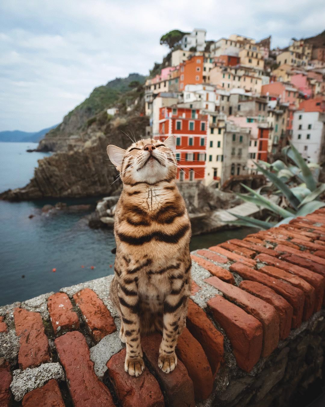 Фото Кошка получает удовольствие от красот Италии, by Marti Gutfreund