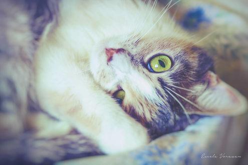 Фото Кошка с зелеными глазами, by TRIS31