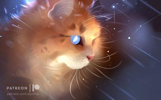 Фото Кошка с голубыми глазами под дождем, by Apofiss