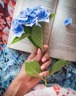 Фото В руке девушки голубая гортензия, которую она держит над книгой, by Olga Slizh