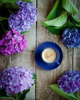 Фото Чашка кофе на блюдце в окружении гортензий