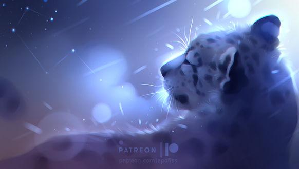 Фото Леопард на фоне ночного неба, by Apofiss