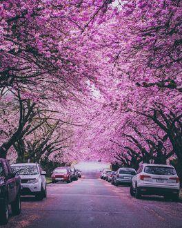 Фото Весенняя улица Ванкувера, by Staysinspired