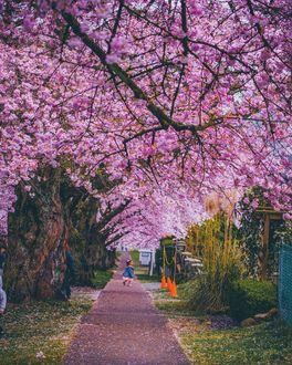 Фото Девочка стоит на дорожке под цветущими деревьями, Ванкувер, by Staysinspired