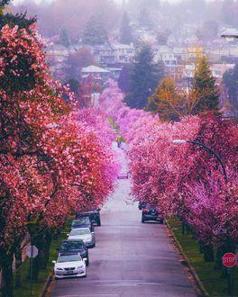 Фото Машины на весенней улице Ванкувера, by Staysinspired