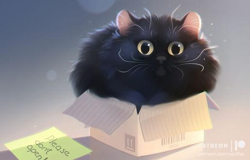 Фото Черный пухлый котик залез в маленькую коробку, by Apofiss (Pleast dont open!)
