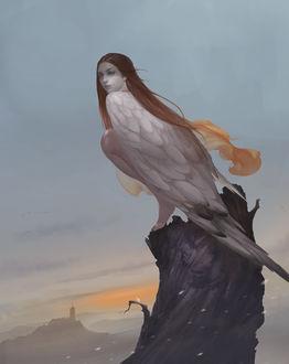 Фото Девушка-птица на пне, by Taiwei bi