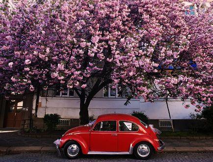 Фото Авто стоит под весенним цветущим деревом