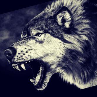 Фото Злой волк, by Massimo Righi