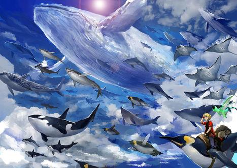 Фото Мальчик на пингвине в небе с парящими китом и касатками