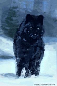 Фото Черный волк стоит в снегу, by Meorow