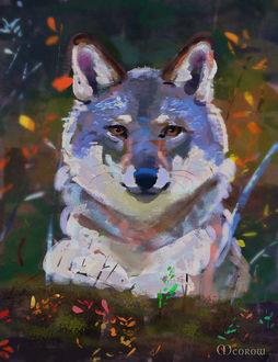 Фото Серый волк в лесу, by Meorow