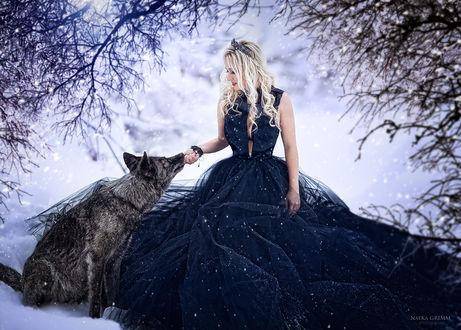 Фото Девушка в синем платье рядом с волком. Фотограф Натка Гримм