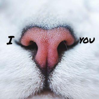 Фото Кошачий носик, похожий на сердечко, by Lyo Cat (I love you)
