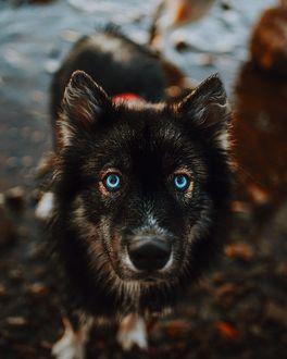 Фото Собака на размытом фоне, by Graywoof