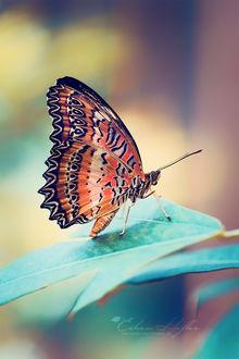 Фото Бабочка на листе, by Eileen Hafke