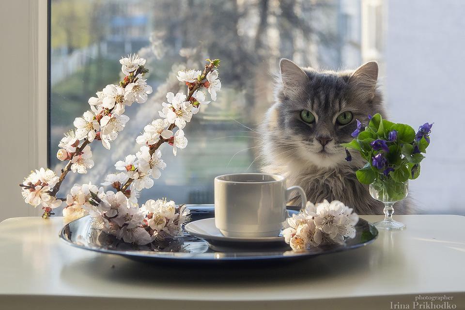 Картинки с котиками доброго утра