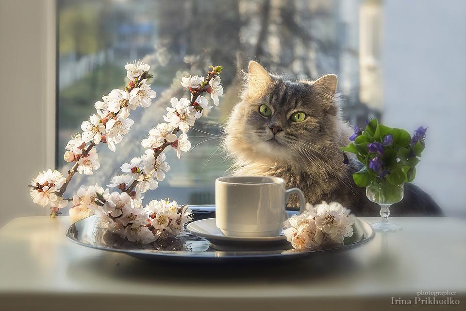Ангел картинки, картинки котов с добрым утром