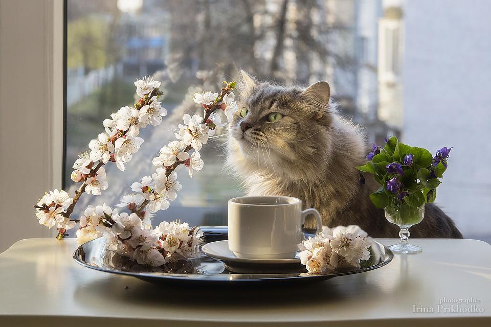 Открытки юбилей, открытки с добрым утром с кошками