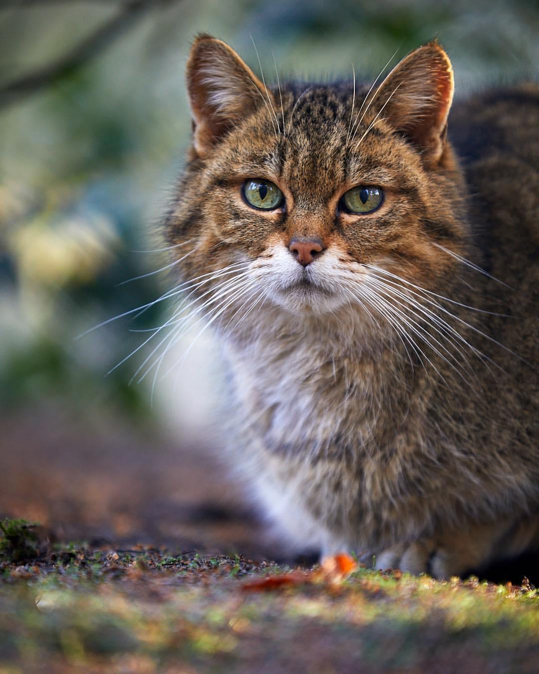 Фото Кошка с зелеными глазами, by generalstussner