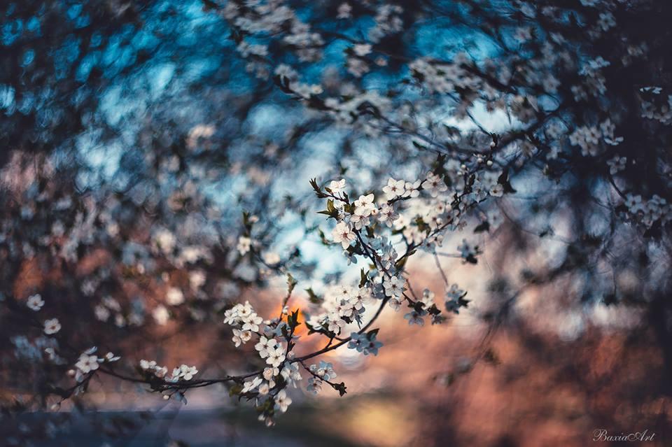 Фото Цветущие весенние веточки на размытом фоне, by BaxiaArt
