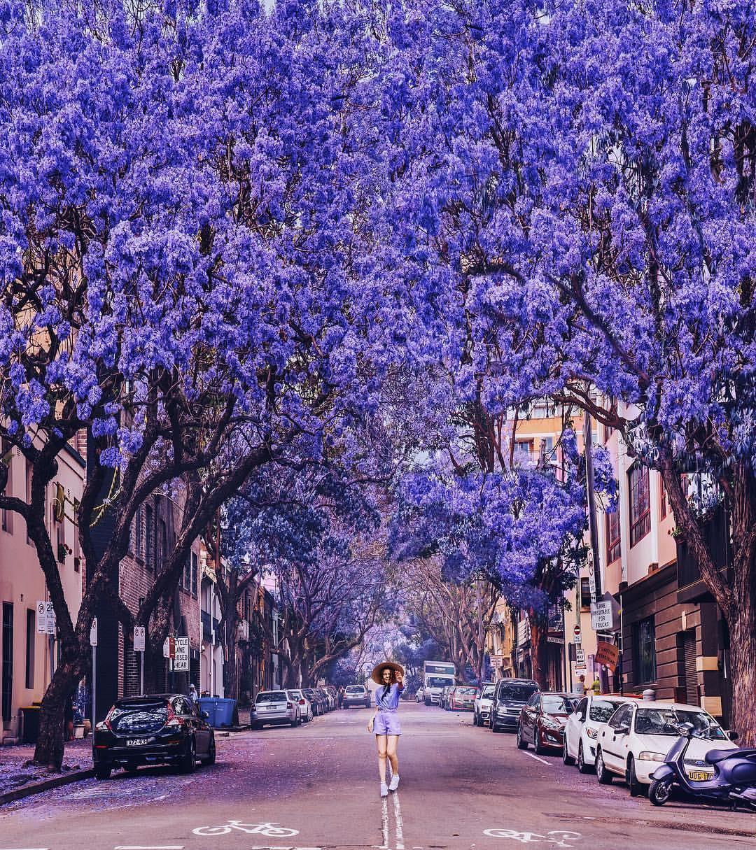 Фото Девушка стоит на дороге под цветущими деревьями, by hobopeeba / Kristina Makeeva
