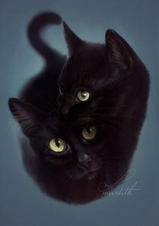 Фото Две черные кошки, by Martith
