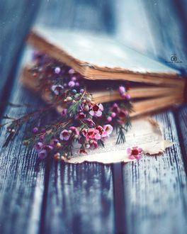 Фото Цветочки в книге, фотограф Татьяна Миронова