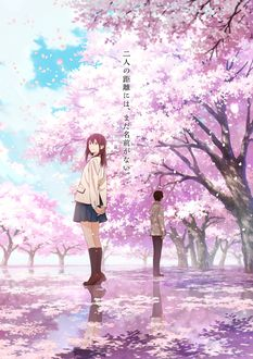 Фото Персонажи - парень с девушкой стоят на аллее под цветущими деревьями сакуры из аниме Kimi no Suizou wo Tabetai