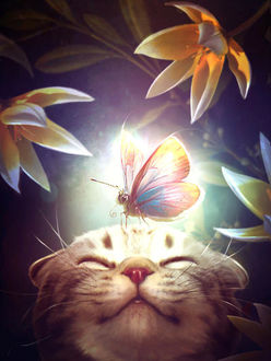 Фото Кошка с мотыльком на голове, by ElenaDudina