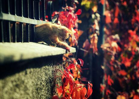 Фото Рыжий котенок пролез через ограду. Фотограф Вьюшкин Игорь