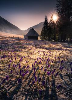 Фото Весна в Хохоловской долине, Татры, Польша. Фотограф Karol Nienartowicz