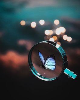 Фото Голубая бабочка через лупу, by Starrush
