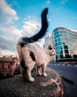 Фото Кошка на фоне домов и неба, by james. horizon