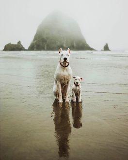 Фото Семейство стаффордов на морском берегу, by Wayswithwinnie