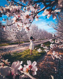 Фото Девушка cтоит межу цветущими весенними деревьями, by siberianvolk